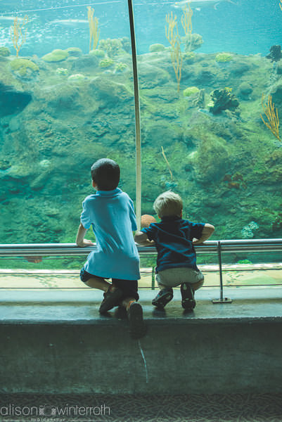 Lifestyle_family_session_aquarium _Web_WM-56