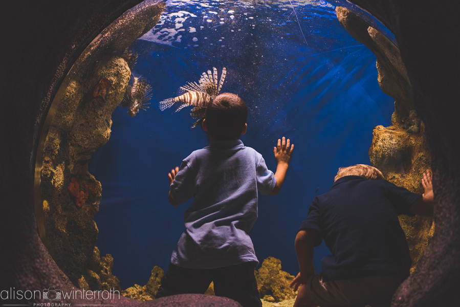 Lifestyle_family_session_aquarium _Web_WM-59