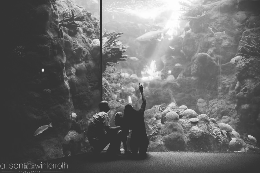 Lifestyle_family_session_aquarium _Web_WM-67