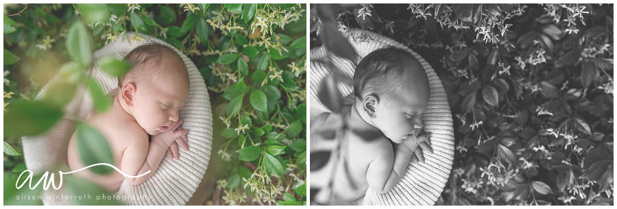 South Tampa Newborn Photographer_0040