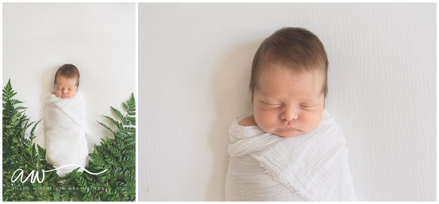 A newborn baby from Tampa Fl is laying in ferns for a creative and beautiful fine art newborn image.