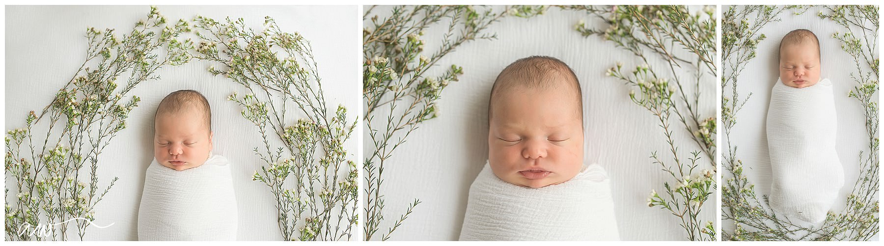 South Tampa Newborn Photographer